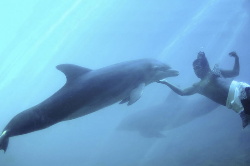 Dolphins Mayans photo 3