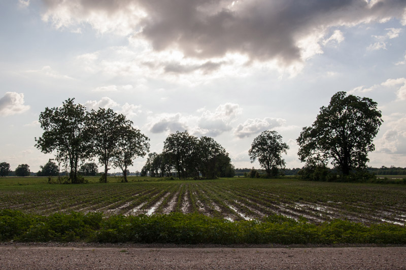 Landscape at the Mississippi Delta workshop with Photo Xpeditions in 2014